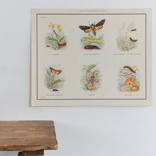Load image into Gallery viewer, Vintage Harvey School Educational Poster / Print - Stages in the Life History of Moths A