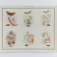 Load image into Gallery viewer, Vintage Harvey School Educational Poster / Print - Stages in the Life History of Moths C