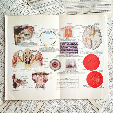 Vintage Medical Pages - Eye Structures