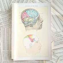Load image into Gallery viewer, Vintage Medical Pages - Functions of the Brain