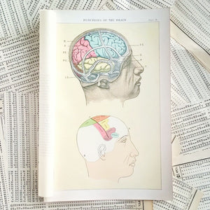 Vintage Medical Pages - Functions of the Brain