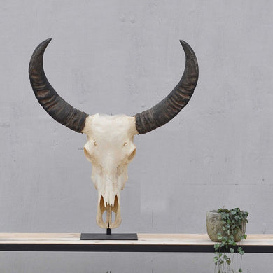 Vintage Water Buffalo Horns & Skull on Stand