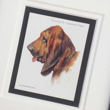 Load image into Gallery viewer, Framed Dog Breed Vintage Cigarette Card - Bloodhound - Head