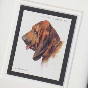 Framed Dog Breed Vintage Cigarette Card - Bloodhound - Head