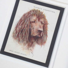Load image into Gallery viewer, Framed Dog Breed Vintage Cigarette Card - Irish Water Spaniel - Head