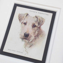 Load image into Gallery viewer, Framed Dog Breed Vintage Cigarette Card - Sealyham Terrier - Head