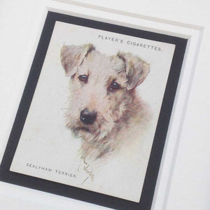 Framed Dog Breed Vintage Cigarette Card - Sealyham Terrier - Head