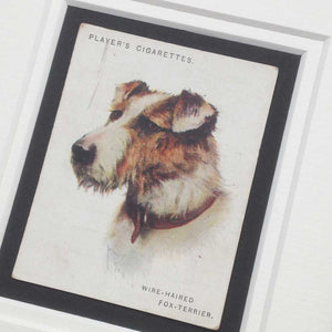 Framed Dog Breed Vintage Cigarette Card - Fox Terrier (Wire Haired) - Head