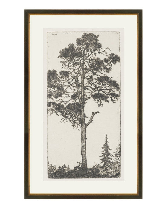 TREE ETCHINGS I