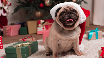Top 10 Dog Toys This Christmas
