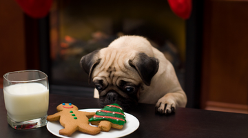 Common Christmas Foods Toxic To Dogs