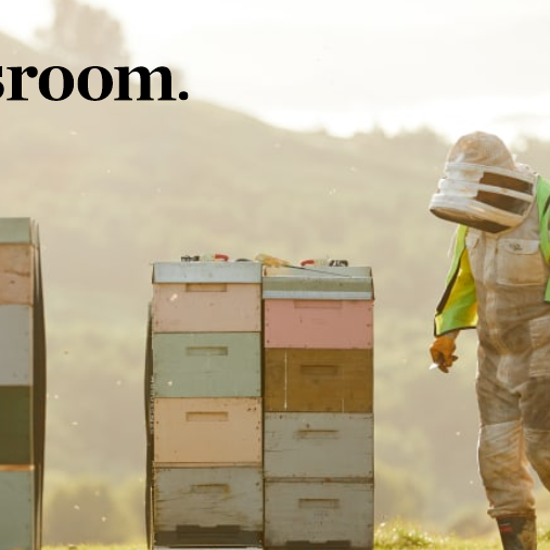 The secret life of beehives