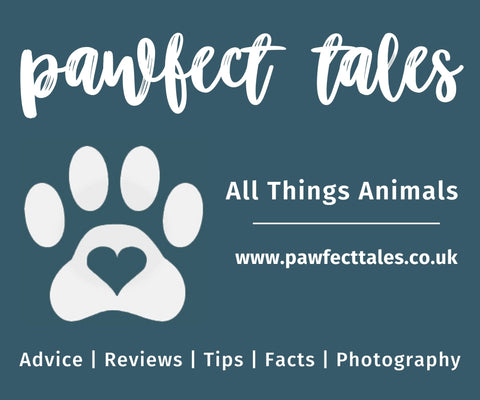 pawfect tales blog