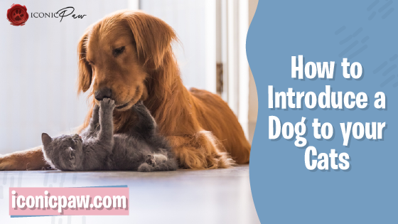 How to Introduce Your Dog to Your Cat