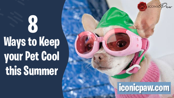 8 Ways to Keep Your Pet Cool This Summer