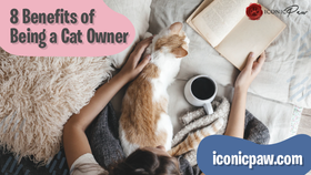 8 Benefits of Being a Cat Owner