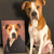 The Aristocrat Custom Pet Portrait - Pet Portraits