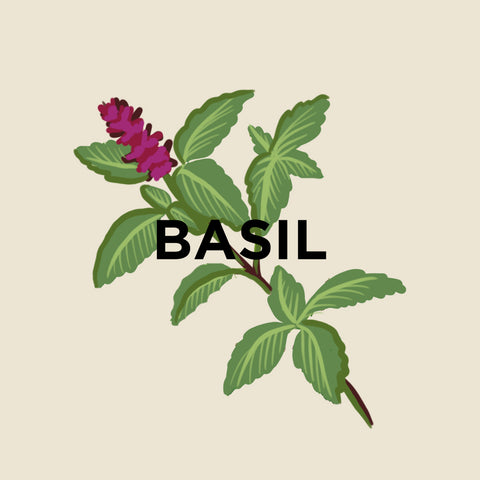 Basil-kuura-essentials