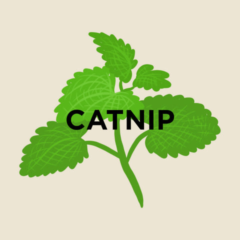 Catnip-kuura-essentials