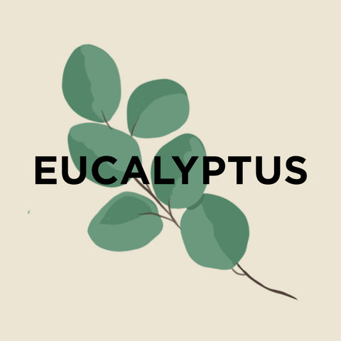 Eucalyptus-kuura-essentials