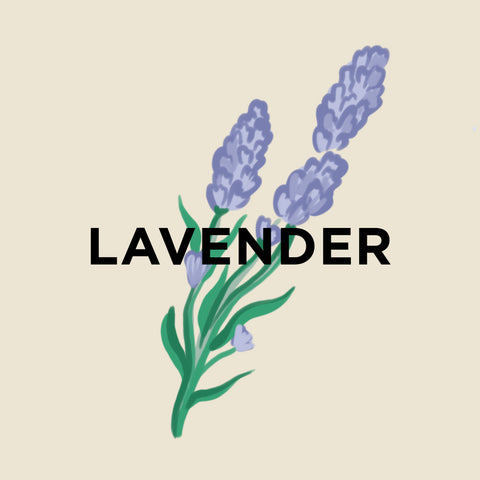 Lavender-kuura-essentials