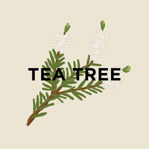 Tea Tree-kuura-essentials