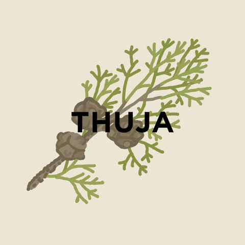 Thuja-kuura-essentials