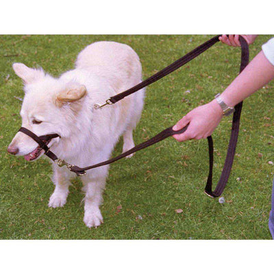 Halti Training Black Dog Lead