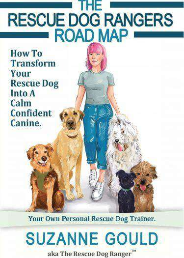 The rescue dog ranger road map