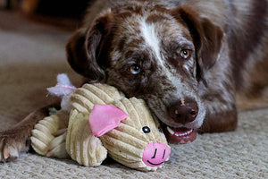8 things to consider when buying toys for your dog