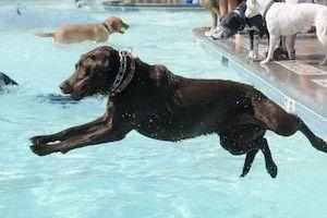 Access Dog Parks Swimming Pools and Cages with JollyWagger Membership