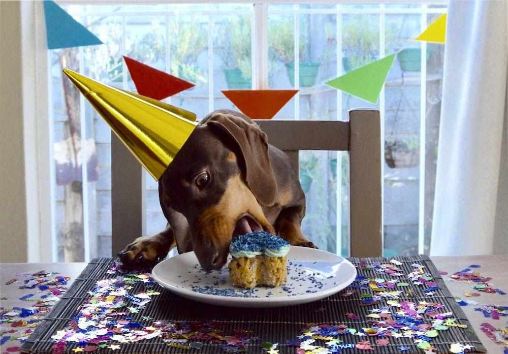 Birthday Surprise for your dog with JollyWagger Membership