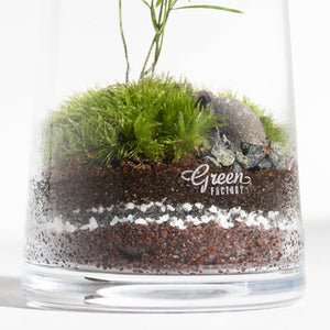 GREEN FACTORY | Forest Small Asparagus Terrarium - LONDØNWORKS