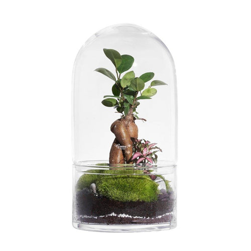GREEN FACTORY | Jungle Rocket Large Ficus Terrarium - LONDØNWORKS