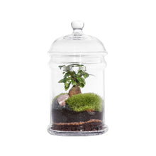 Load image into Gallery viewer, GREEN FACTORY | Dome Ficus Microcarpa Terrarium - LONDØNWORKS