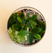 Load image into Gallery viewer, GREEN FACTORY TERRARIUMS | Jurassic Lab XL Ficus Microcarpa - LONDØNWORKS