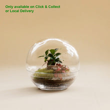 Load image into Gallery viewer, GREEN FACTORY TERRARIUMS | Forest Medium Ficus Microcarpa - LONDØNWORKS