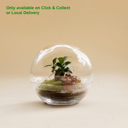 GREEN FACTORY TERRARIUMS | Forest Moon Medium | Ficus Microcarpa - LONDØNWORKS