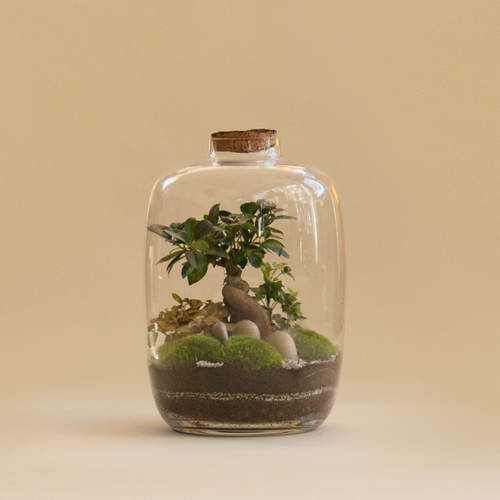 GREEN FACTORY | Forest Moon Medium Ficus Terrarium - LONDØNWORKS