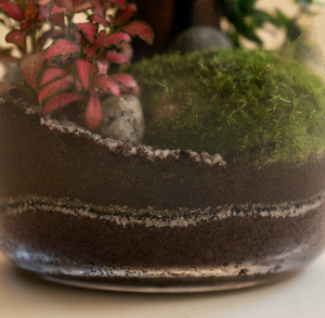 GREEN FACTORY TERRARIUMS | Forest Moon Medium Ficus - LONDØNWORKS
