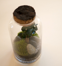 Load image into Gallery viewer, GREEN FACTORY | Small Garden Ficus Microcarpa Terrarium - LONDØNWORKS