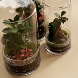 GREEN FACTORY TERRARIUMS | Jungle Tower Large Ficus - LONDØNWORKS
