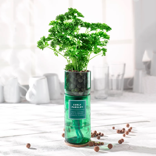 GGWW | Curley Parsley Hydro-Herb Kit - LONDØNWORKS
