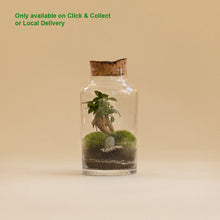 Load image into Gallery viewer, GREEN FACTORY TERRARIUMS | Small Garden Ficus Microcarpa - LONDØNWORKS