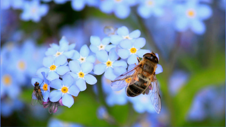 How do bees help us to stay alive? - Guest Blog