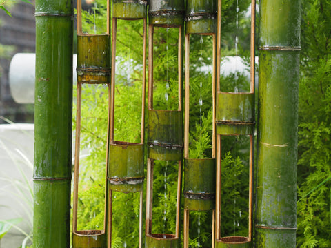 Bamboo Water Collector