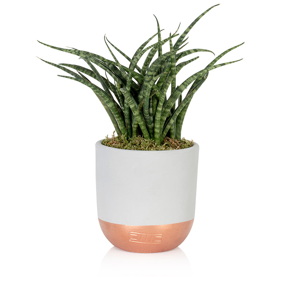 Succulent - Medium Dipped Pot