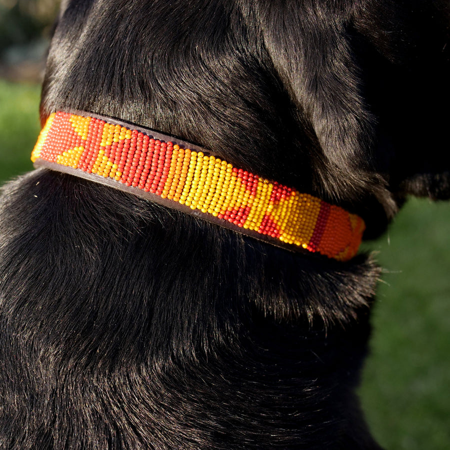 Mbwa Mwitu Dog Collar