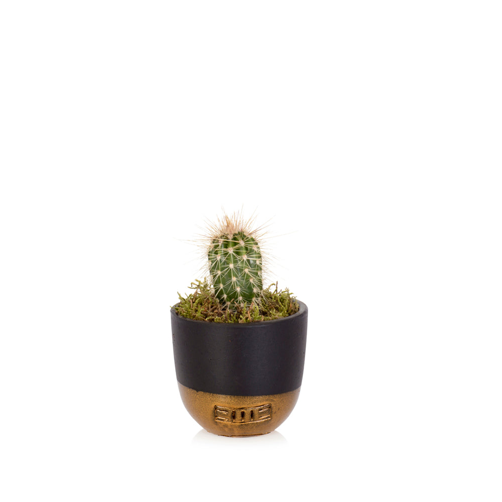 Succulent - Mini Dipped Pot