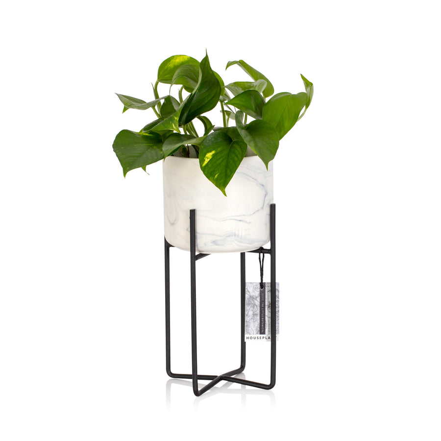 House Plant - Marble Planter with Stand